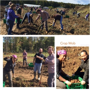 Crop Mob - October 10, 2015